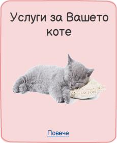 Търсите някой да гледа котките ви от София? Доверете се на Рошковци на най-ниски цени в София