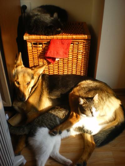 Грижа за домашните любимци вкъщи от петситър - Конти, Бела и Нюню